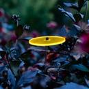 Sonnenscheiben mit Stiel - klein 8cm