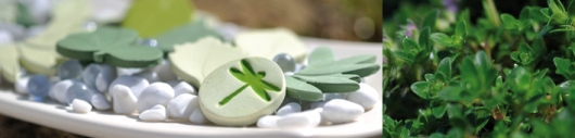 RAUMDUFT - KOLLEKTION - SOUS LES FEUILLES - Ein belebendes, grün-frisches Zitrusparfum